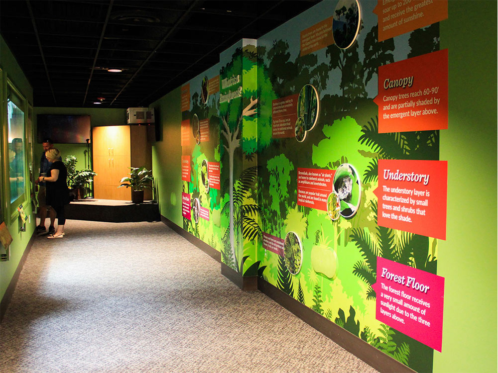 OdySea Rainforest Reptiles Custom Wallpaper Informational Environmental Graphics ArtisanColour